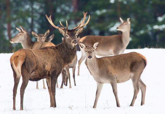 Система учета и контроля животных в зверохозяйствах