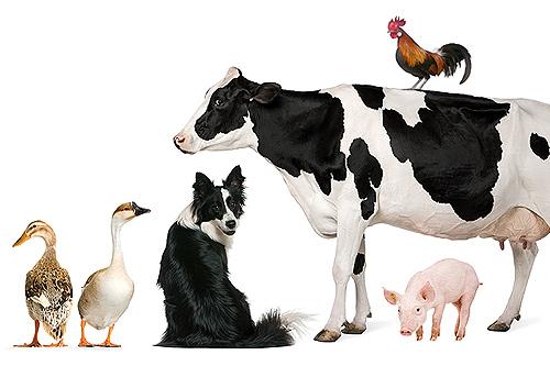 Импорт готовых кормов, премиксов и кормовых добавок в 2019 году