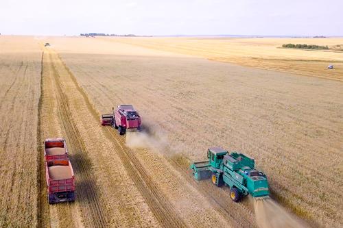 Ситуация на рынке зерна, муки и хлеба. Сценарии и прогнозы развития